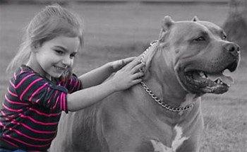 In memory of  4-year old Mia DeRouen, viciously killed in an unprovoked attack by her own pit bull (pictured with Mia) despite efforts by her mother to barricade the child in her room and pass her out the window to paramedics.