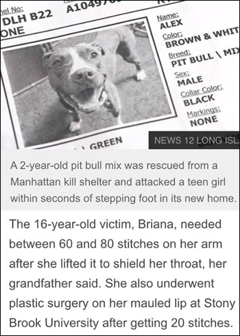 http://www.nydailynews.com/news/national/pit-bull-attacks-ny-teen-rescued-shelter-article-1.2352340